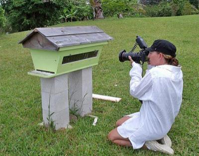 Kodua Galieti working in Hawaii.