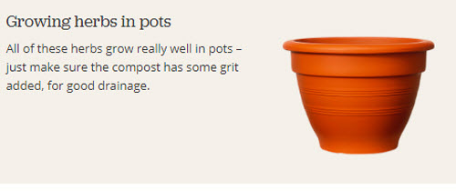 Growing herbs in pots.jpg