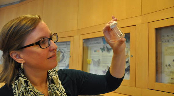 Erin Wilson Rankin examines a western yellowjacket. (I. Pittalwala/UC Riverside)