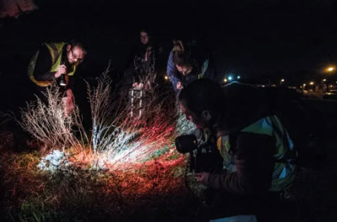Volunteers look for the wormwood moonshiner beetle in Suffolk, UK. Photograph: Sean Smith/The Guardian