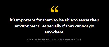 LILACH HADANY, TEL AVIV UNIVERSITY