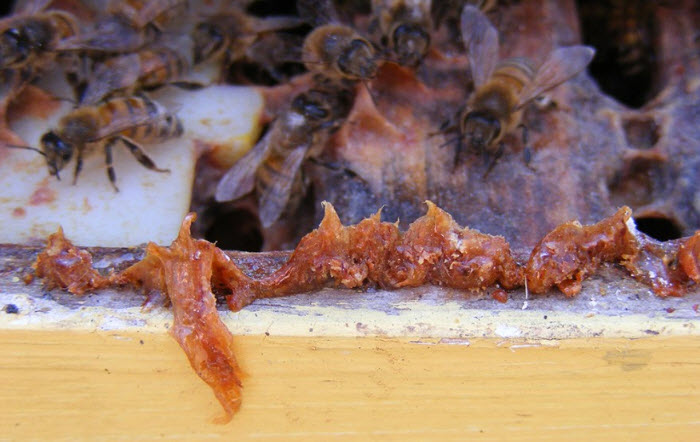 (Photo credit: Flickr/   Ontario Beekeepers' Association Tech Transfer Program   ,    CC BY-NC-ND 2.0   )