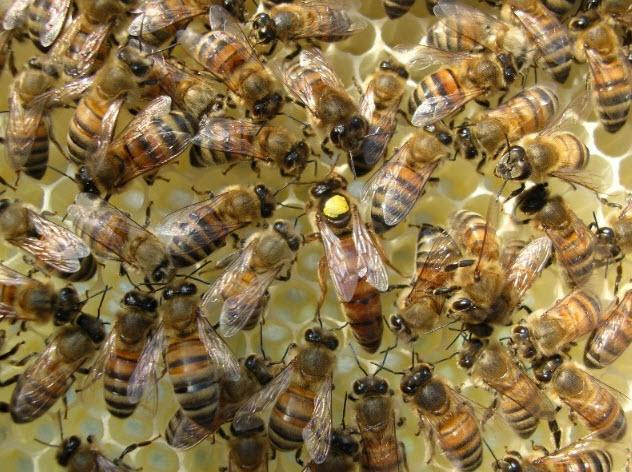 queen bee status.jpg