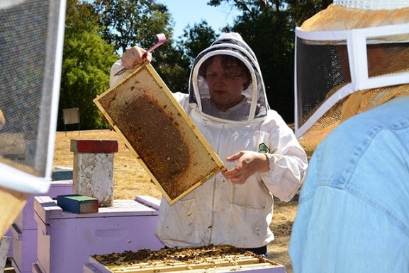 Extension Apiculturist, Elina Lastro Nino, opens a hive at the Harry H. Laidlow Jr. Honey Bee Research Facility, UC Davis. (Photo: Kathy Keatley Garvey)