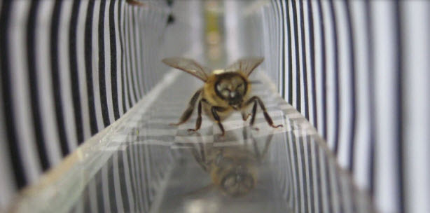 honeybee virtual reality.jpg
