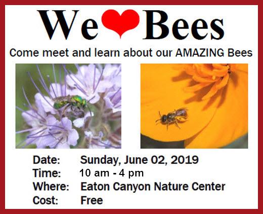 We Love Bees post3.jpg