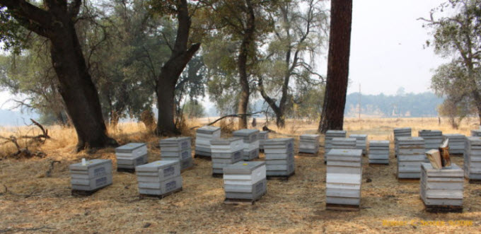 A beekeepers yard in September showing smoke from fires in Northern California 2018.