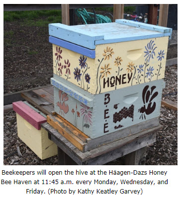 Honey Bee Haven.jpg