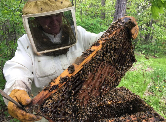 Beekeeper Elaine Peterson lifts a frame out of one of her hives at her property north of Gananoque. (Elliot Ferguson/The Whig-Standard)