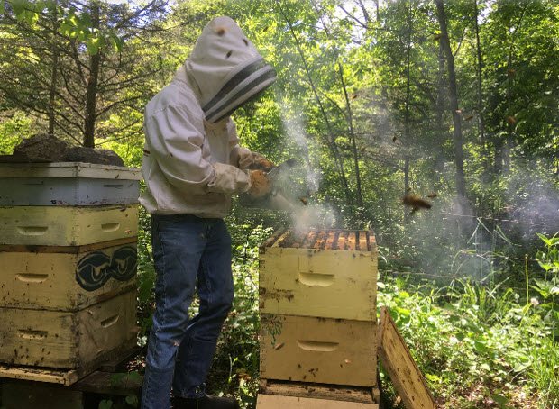 Beekeeper Curtis Brunet adds smoke while opening a hive on his property north of Lansdowne. (Elliot Ferguson/The Whig-Standard)