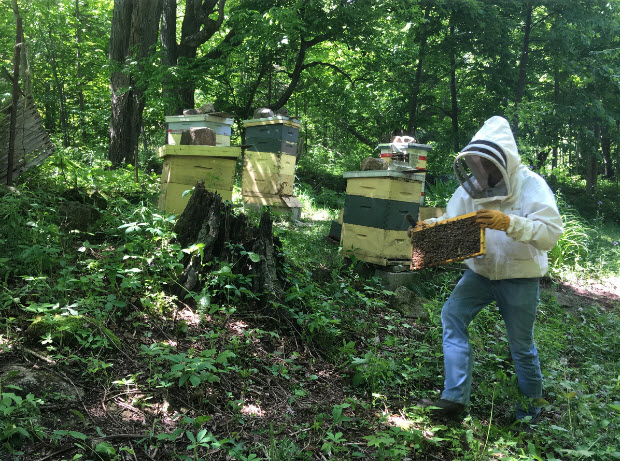 Beekeeper Curtis Brunet carries a frame full of bees over to a new hive on his property north of Landsdowne. (Elliot Ferguson/The Whig-Standard)