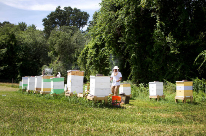 Honeybee hives stand on a field at the Central Maryland Research and Education Center in Beltsville, Maryland. An annual survey of U.S. beekeepers shows the rate of colony death last winter — nearly 40% — was the highest reported since the survey began 13 years ago.  Olivia Falcigno/NPR