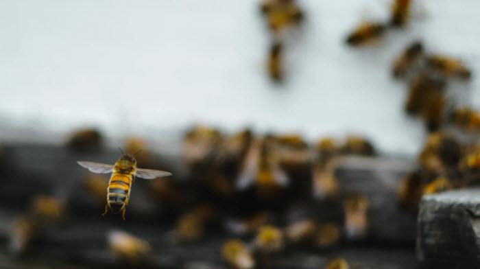 Photo: Peter Nelson ( The Pollinators )