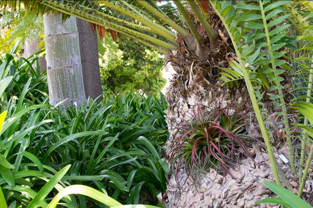 An air plant fills the hole in the cycad's trunk; gravel and steel mesh underneath keep out bees and other creatures. Photo by Deborah Miller.