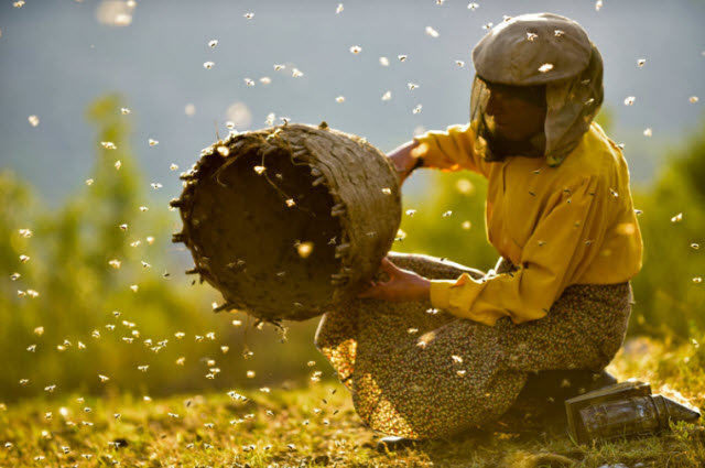 Beekeeper Hatidze Muratova lives in a ruggedly mountainous area of Macedonia. She has a simple rule: When you harvest honey, you only take half — and leave the other half for the bees.  Neon