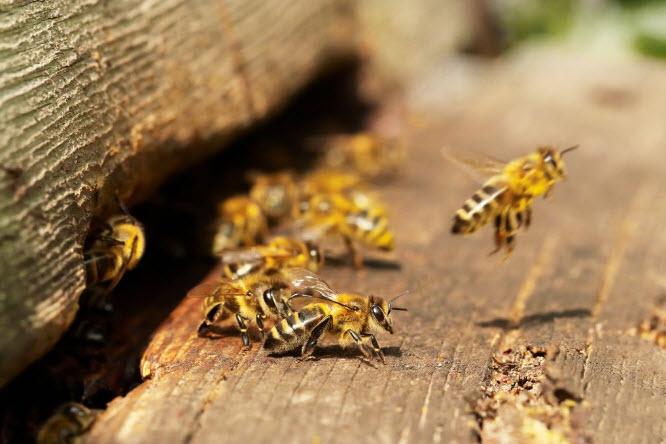 bee movie term paper