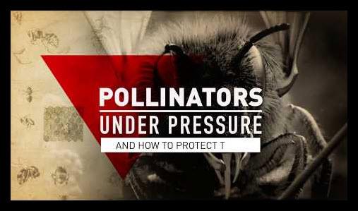 pollinators under pressure.jpg