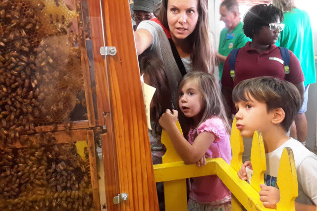 observation hive with mom and kids.jpg