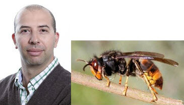 Associate Professor Amro Zayed – York University, Asian Hornet