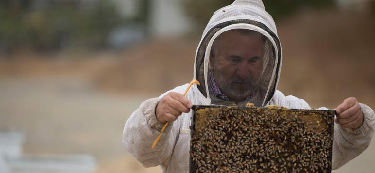 Lecturer Mark Haag examines a frame that he selected from a beehive.
