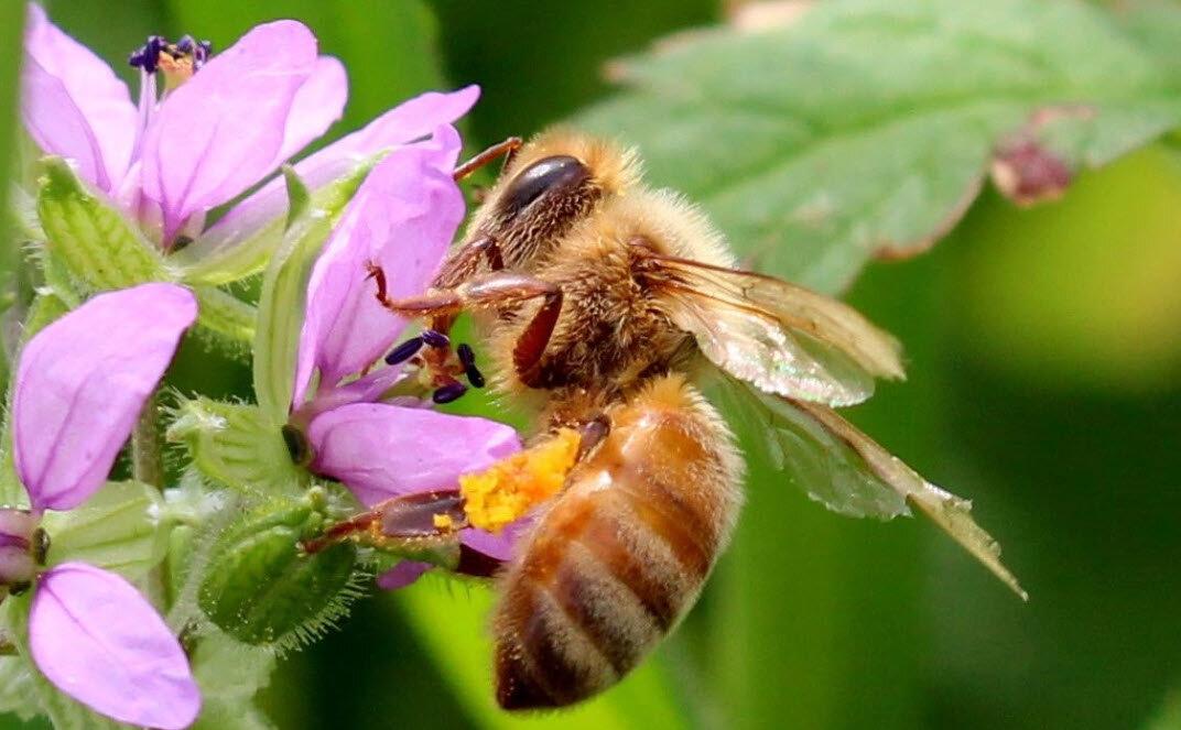 Save The Bees Vegan Bees Nature - Environment SB T-Shirt