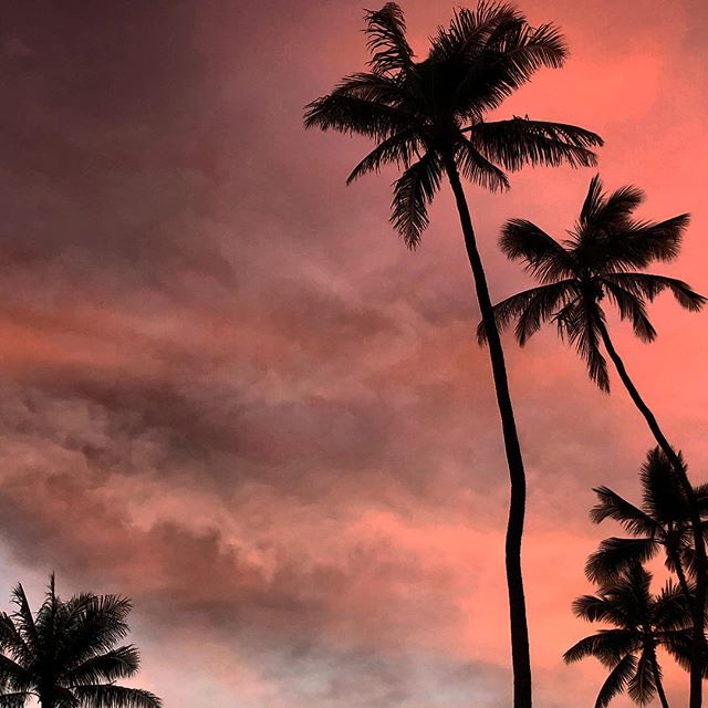 Best kind of holiday cheer 🌴💘☀️ . . . #endlesssummer #hawaii #holidays #holidayseason #tistheseason #waikiki #honolulu #melekalikimaka #aloha #sunset #tropical #vibes #dreamy #skies #coconut #paradise #happy #pov #instagood #instadaily #travelgram #island #islandstyle #islandlife #pinksky #alohaliving #blogger #bohostyle #talahonolulu