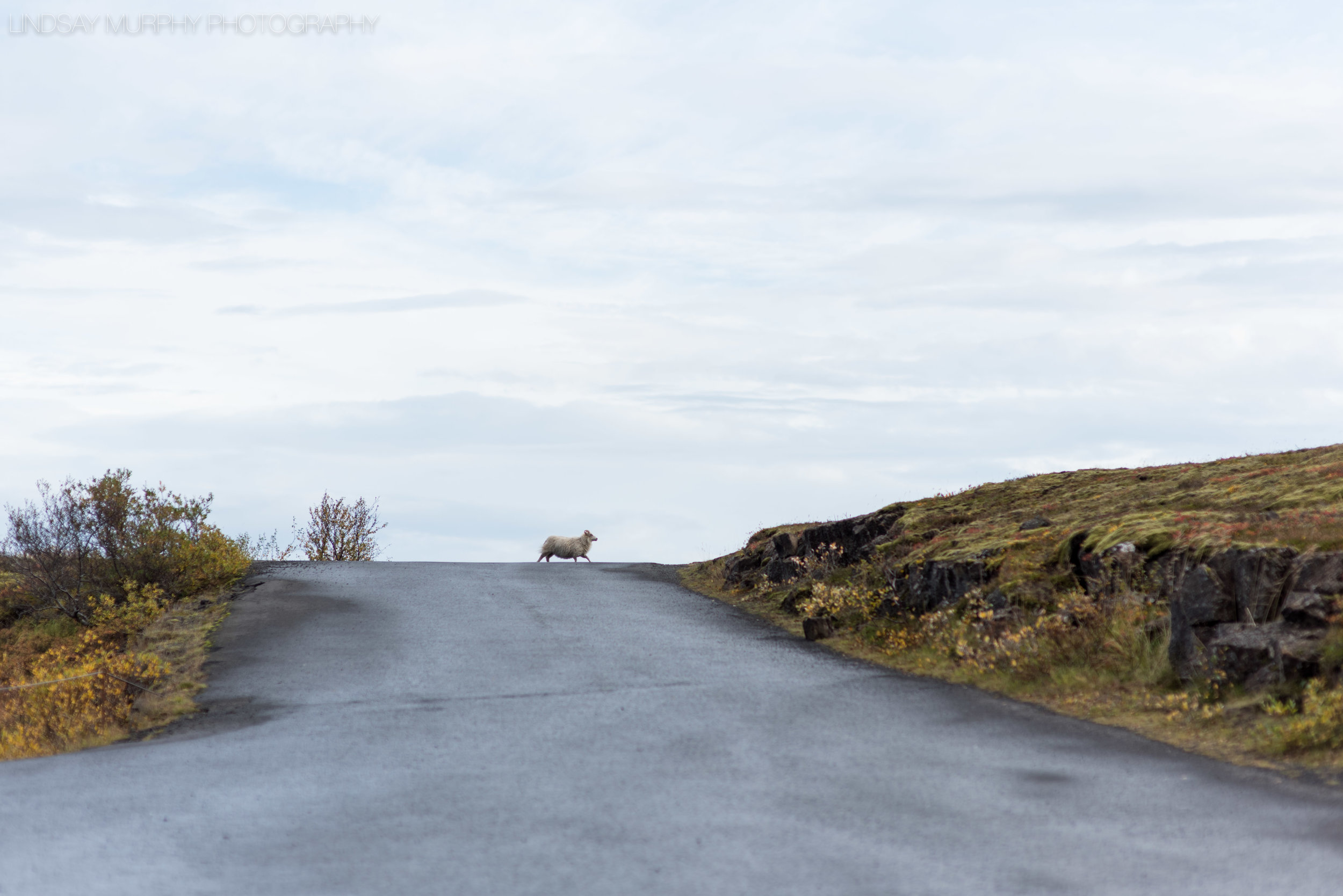 Destination_Iceland_Adventure_Wedding-397.jpg
