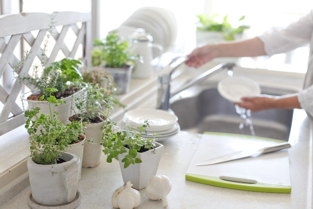 Growing an Indoor Herb Gardens