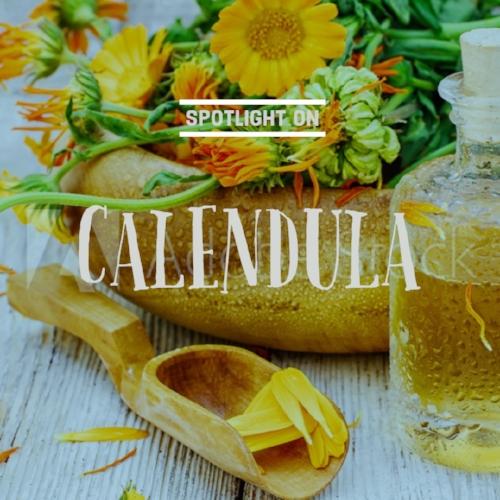 Calendula for ig.jpg