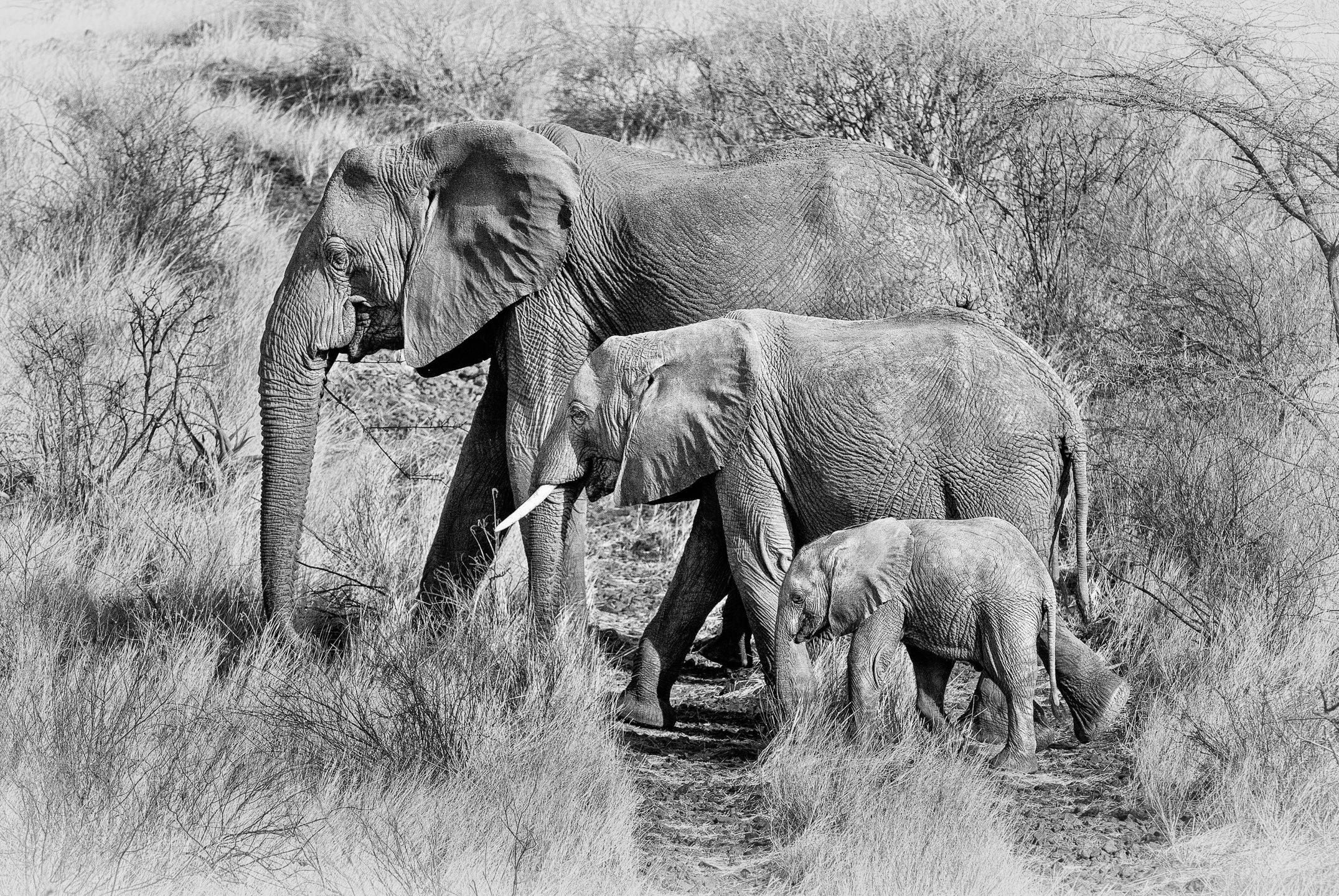 [2010-09-25]_Kenya_NIKON_D700_(00830)-Edit-2-Edit-Edit[2].jpg