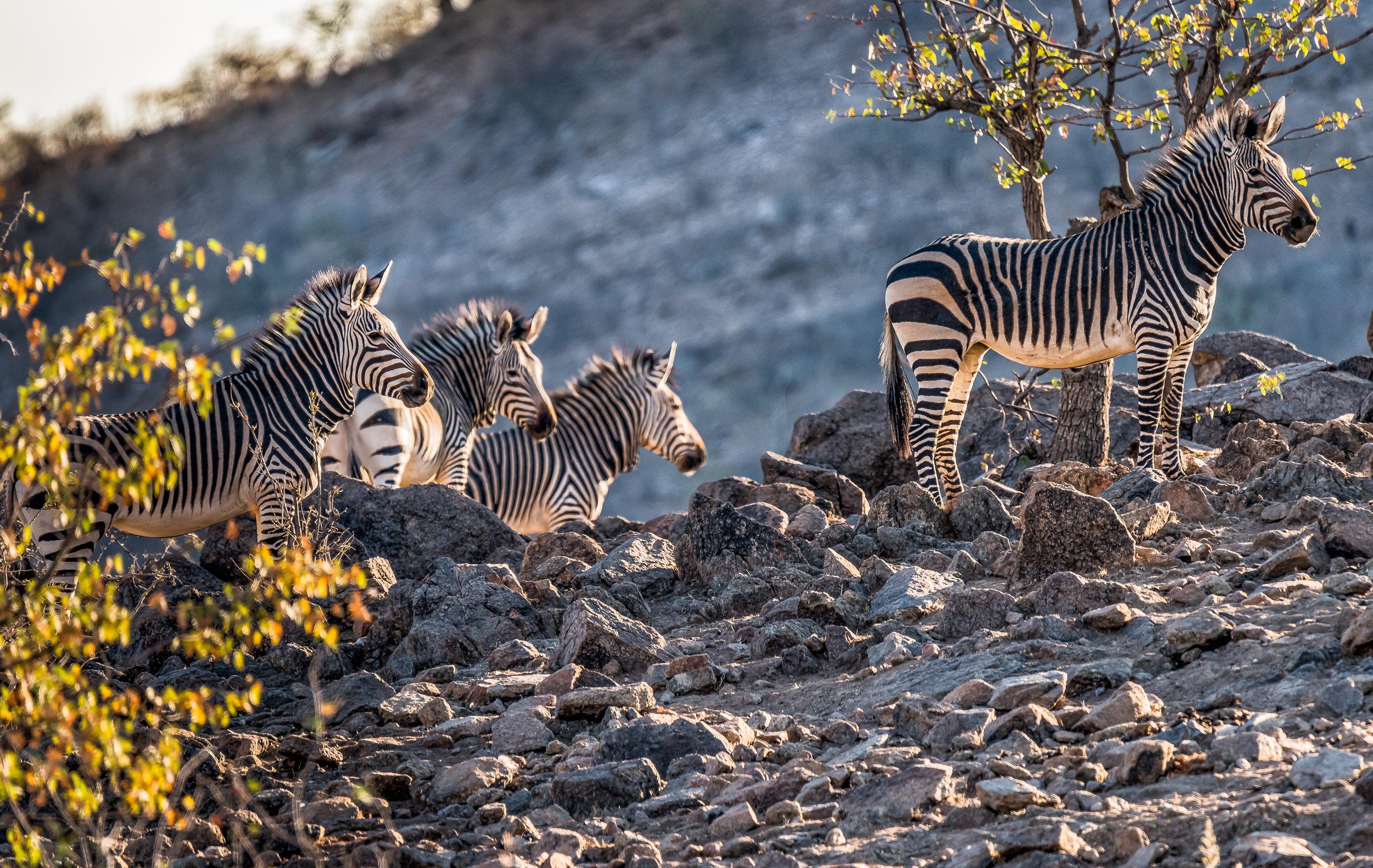 [2016 06 20] Namibia Hobatere Lodge (NIKON D810) 5103-Edit.jpg