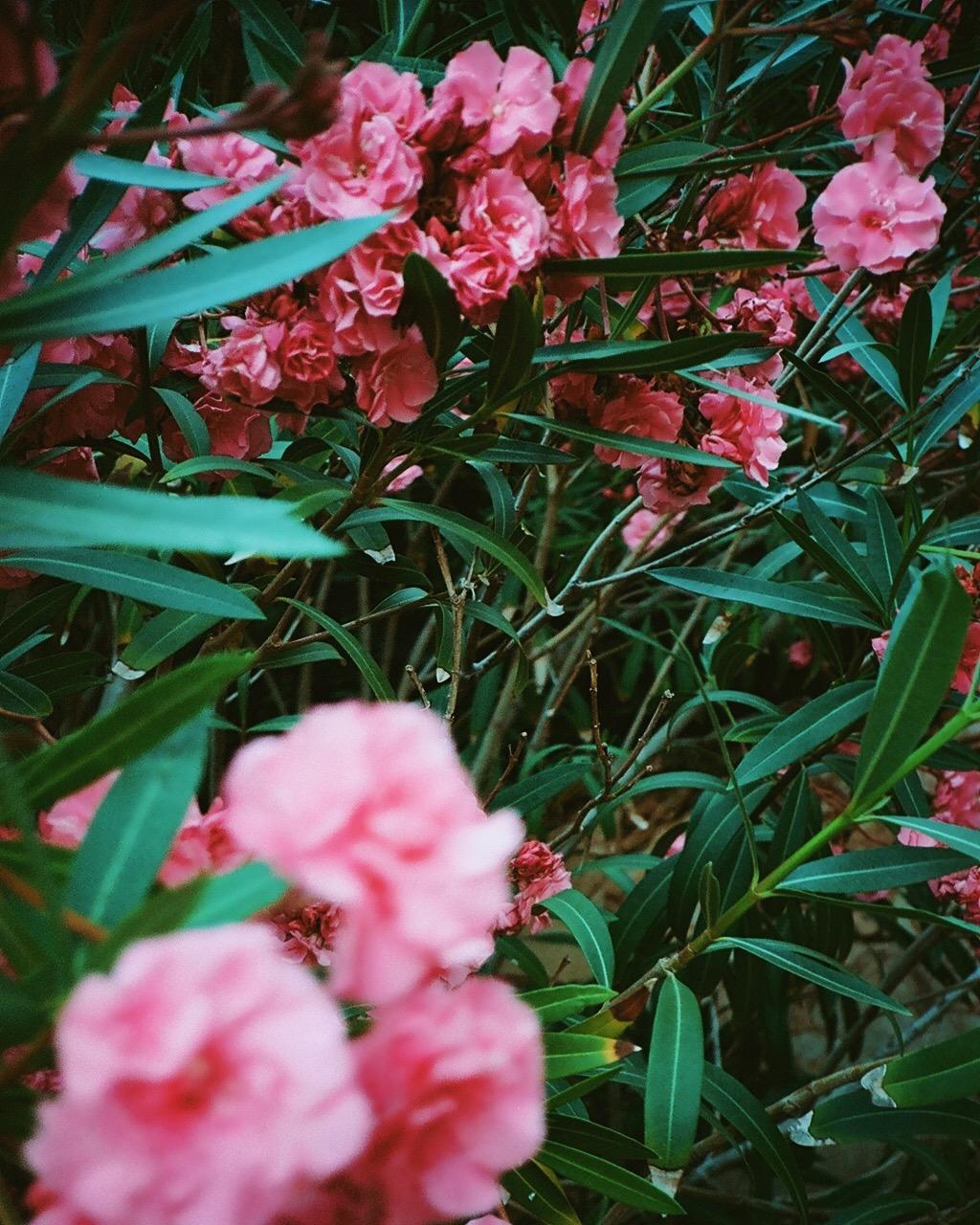 Flowers in Costa Brava