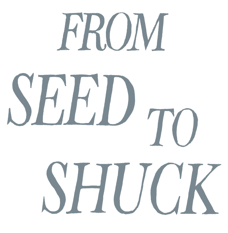 type-seed-to-shuck.png