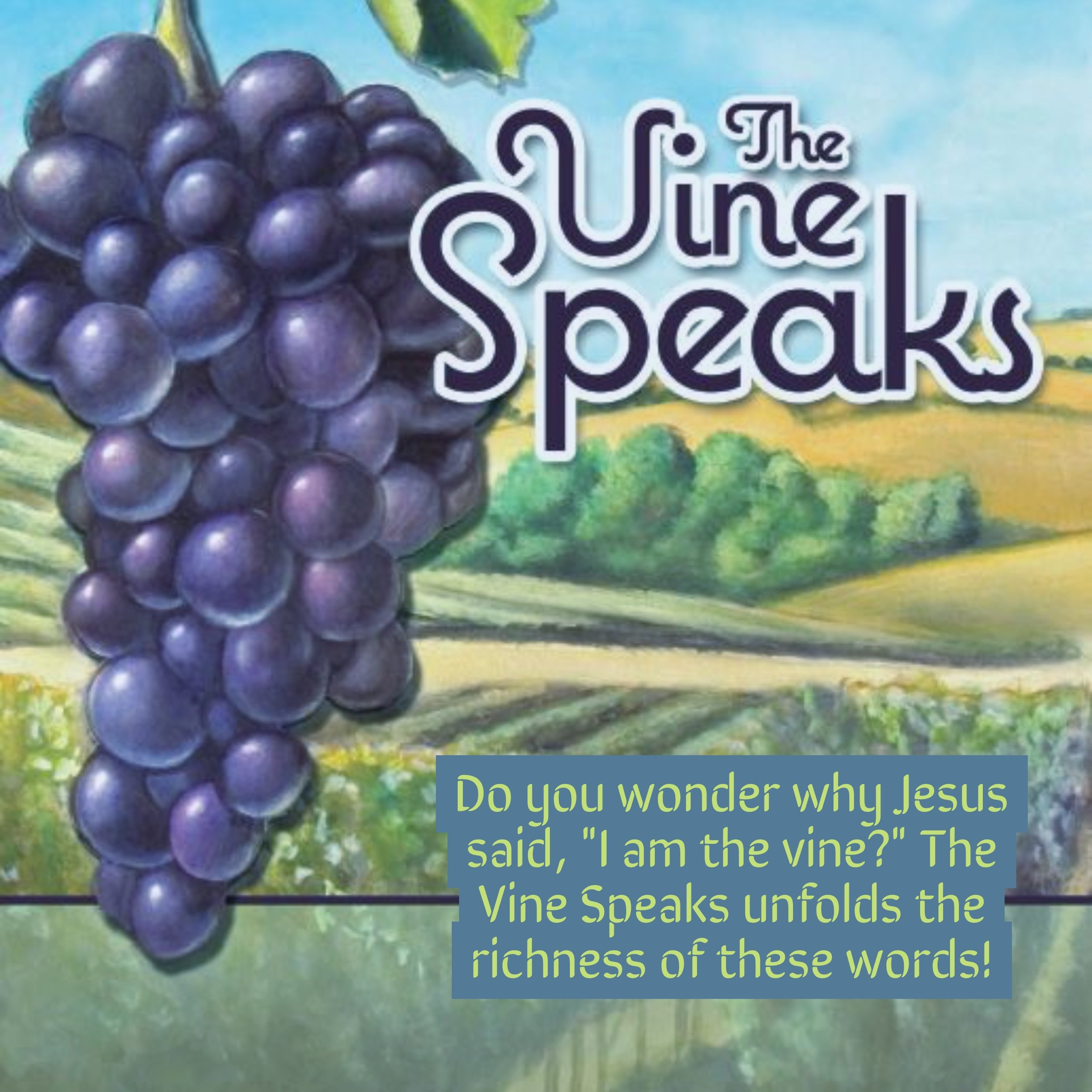 Cindy's understanding of Jesus' words after 20 years of working in her vineyards.