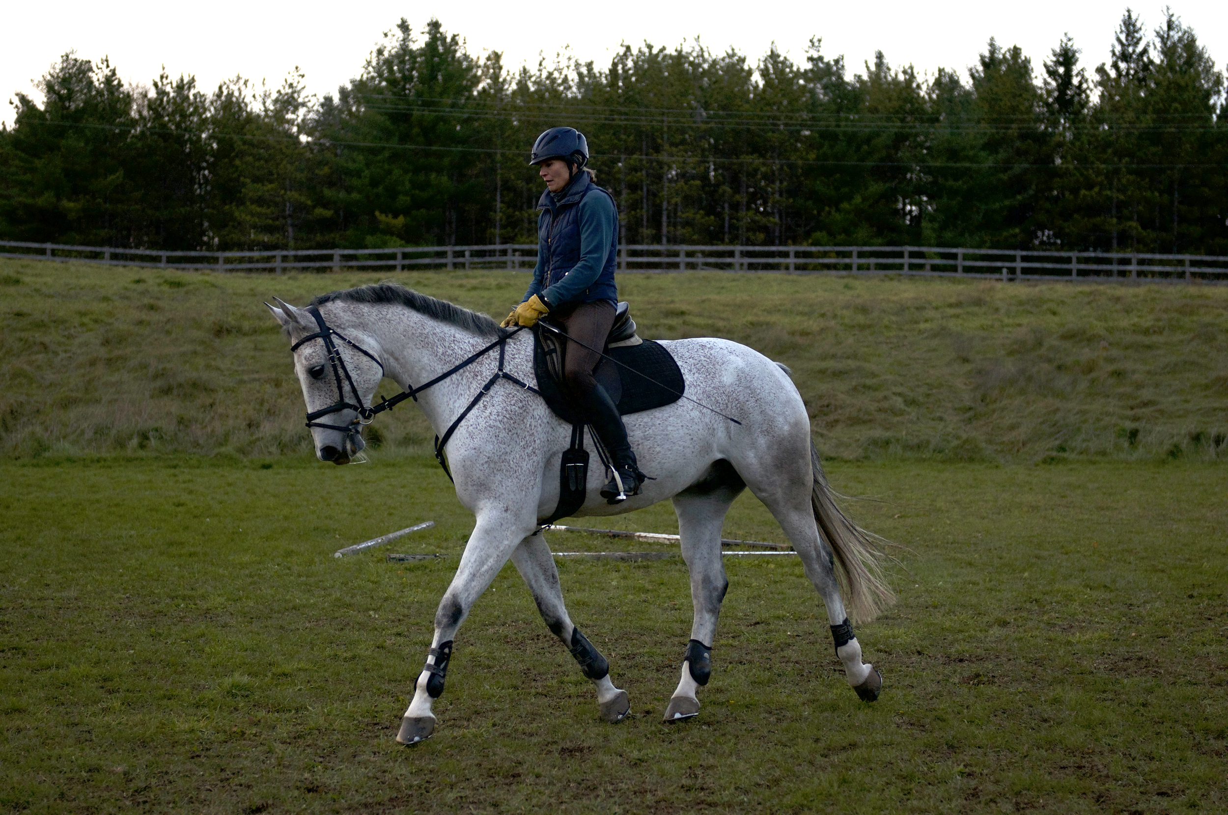 The Diagonal Aiding - Alex ReinfelsFounder of LevadeLife Long Equestrian and Horse Trainer