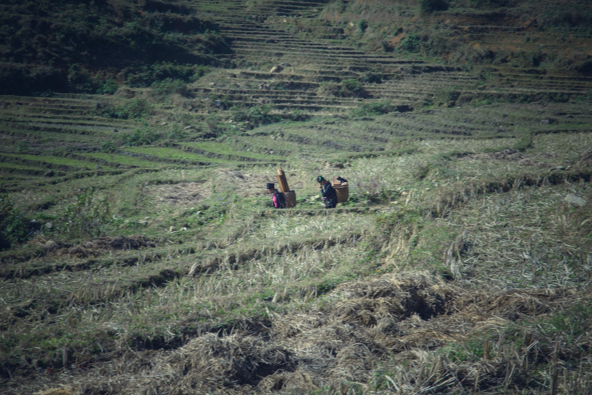 Rice field workers in Sapa, Vietnam. Now these people know how to work hard.