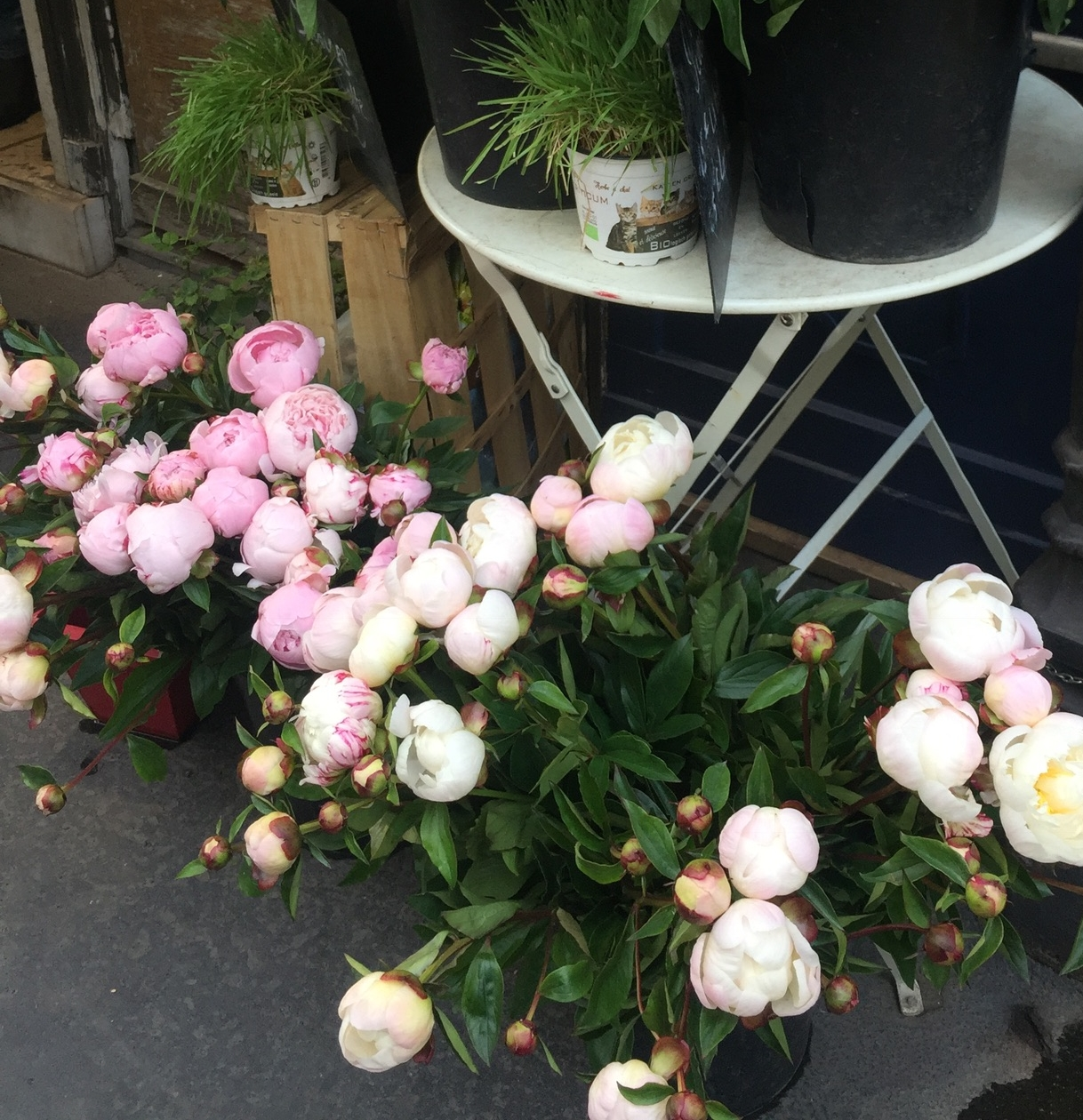 Pretty peonies on the street