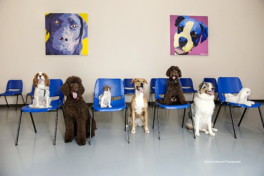 Line up of dogs at training center