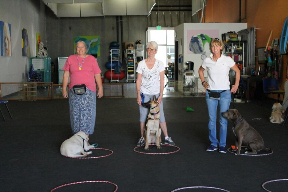 group canine games