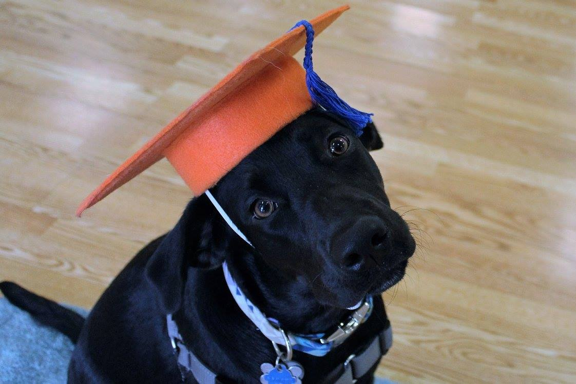 alert graduate black lab