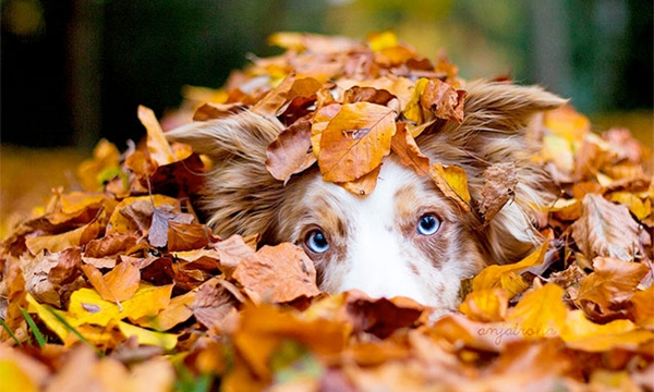 New Fall ClassesAre Here! - Summer is on it's way out and time to get your loyal best friend in classes or if you have a puppy, starting them right. Check out our line up for new fall classes. We have something for everyone!