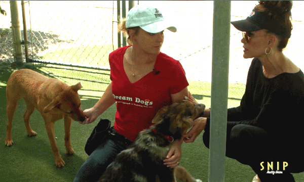 Big Dogs Demystified... - Lori Carman, trainers at local shelters and SNIP teamed up to explain how big dogs can be an amazing addition to your family. Find out more!