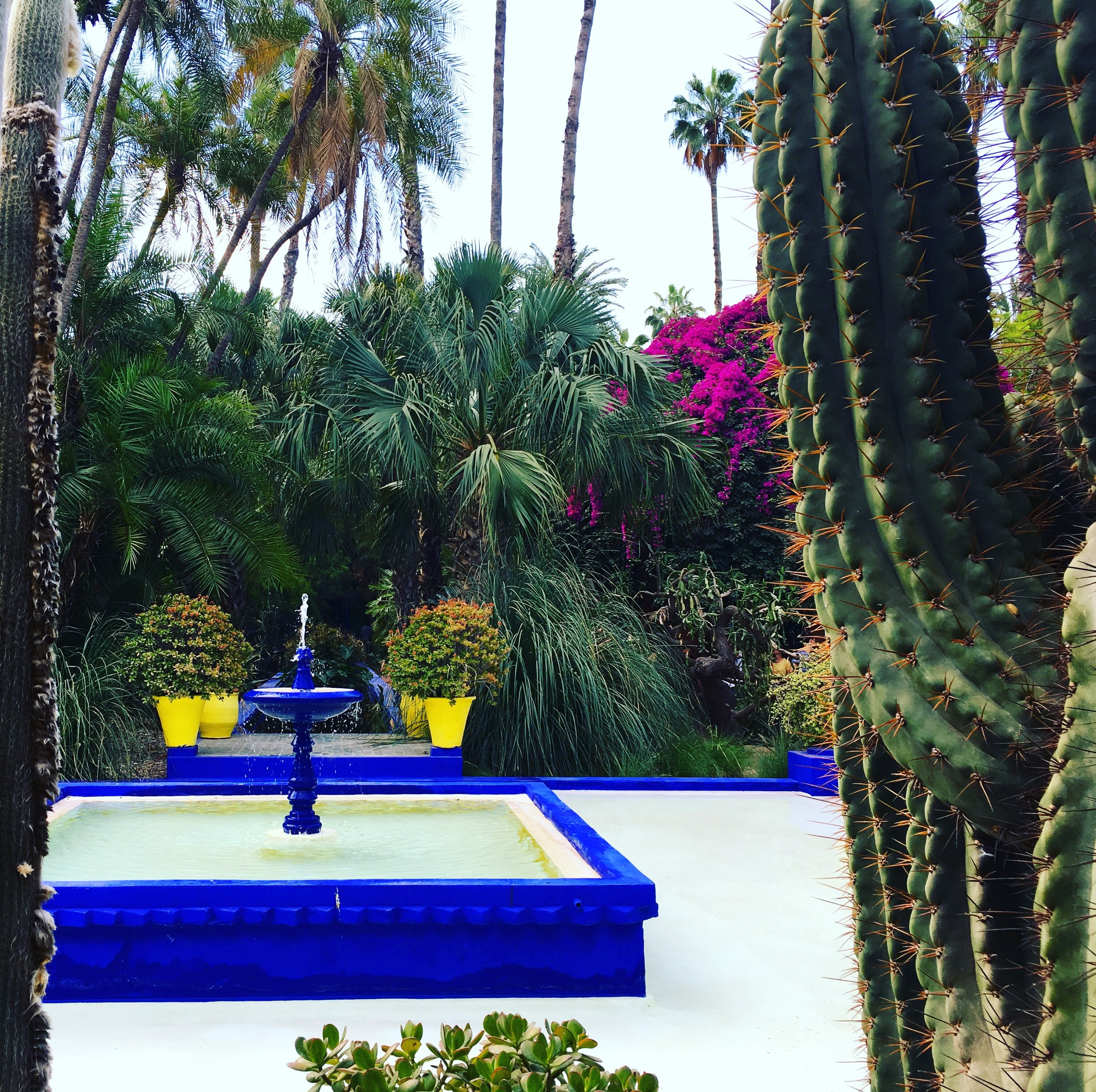 Jardin Majorelle, one of my favorite places in Marrakech.  It's beautiful, and worth at least 45 mins.