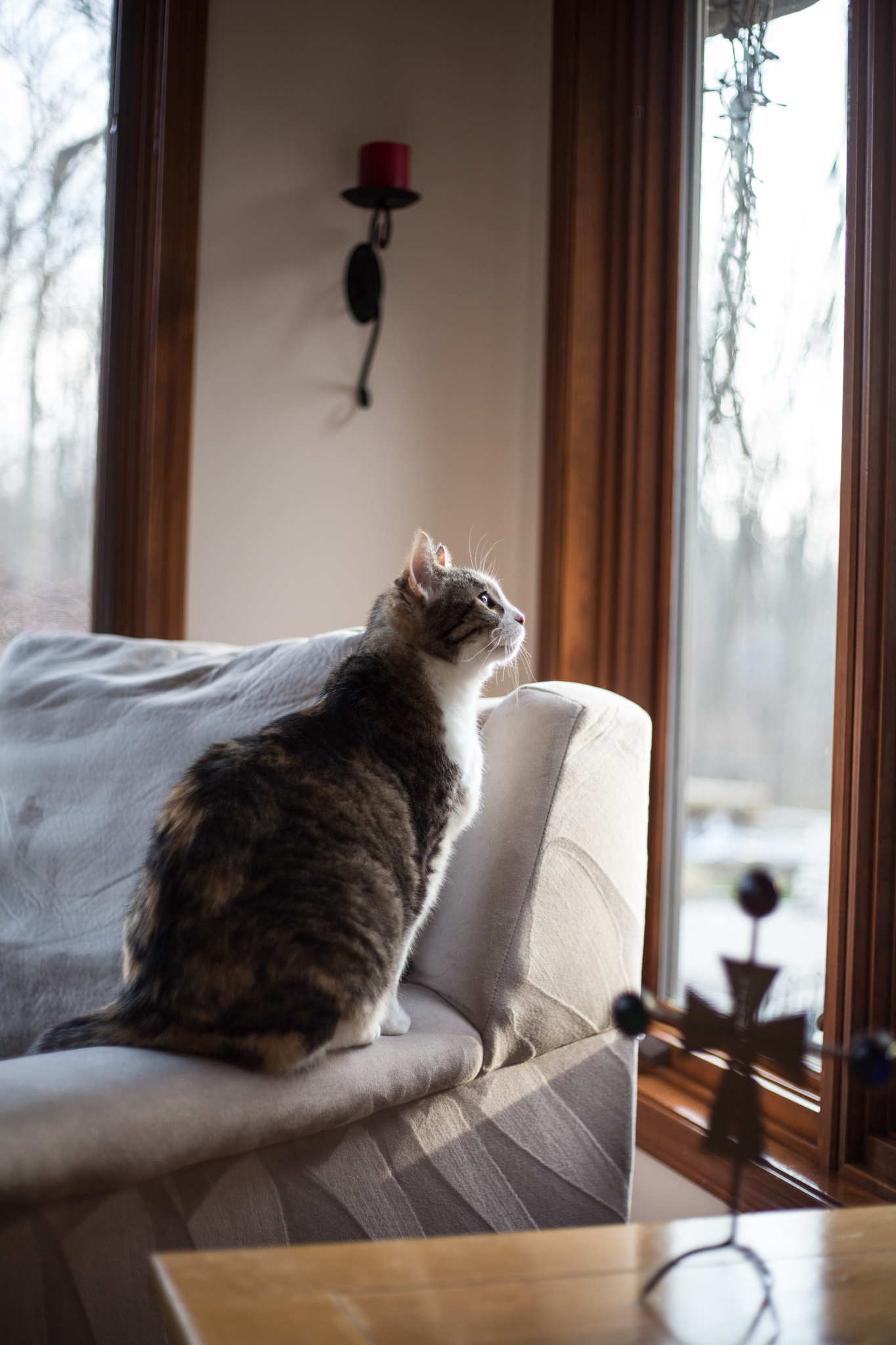 Spring sprung out briefly... oh so briefly... but now Winter has come again.  - My cat Greta's thoughts as she stares longingly out the window.