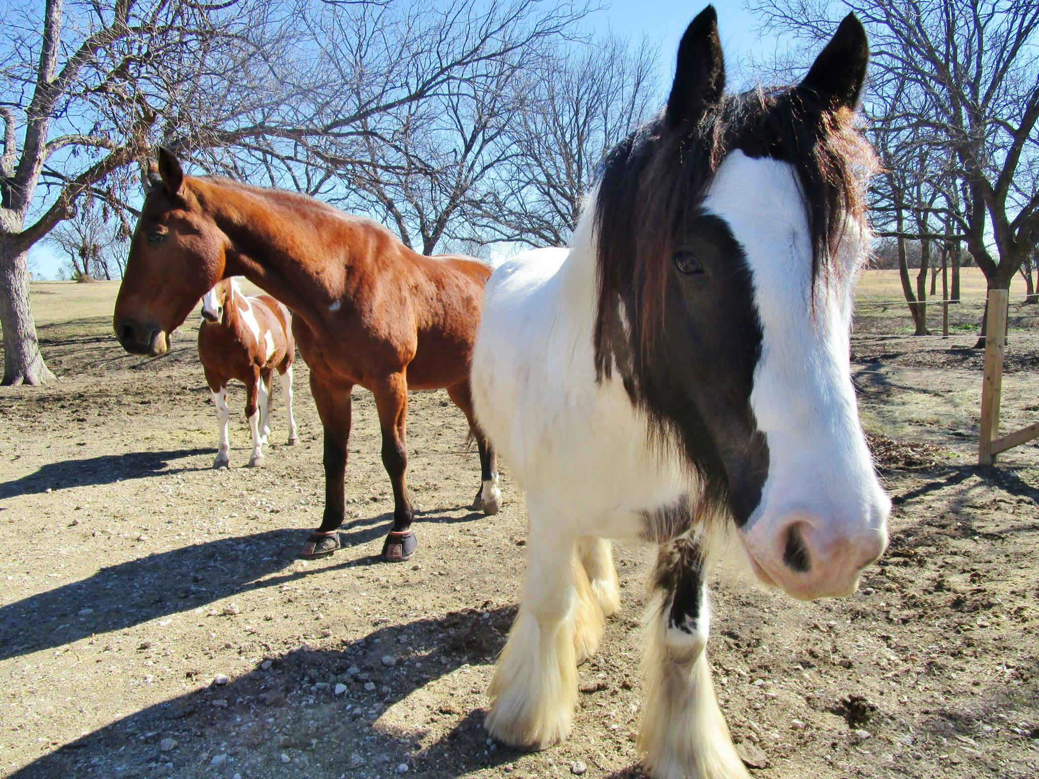 Cody pony and other horse.jpg