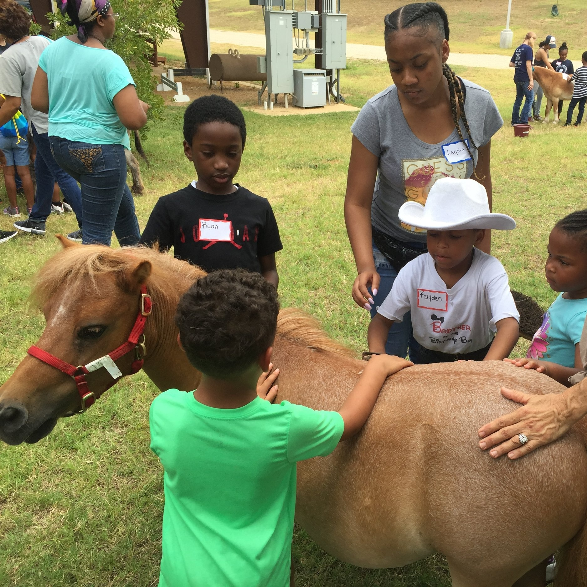 EQUINE FACILITATED LEARNING