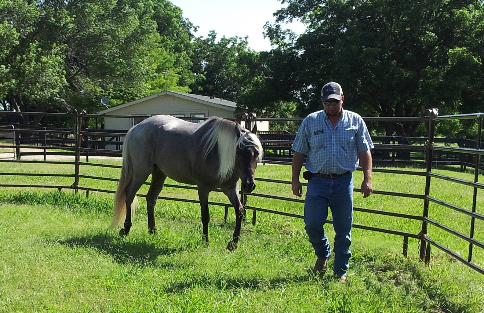 Equine Facilitated Counseling photo of Brad Causey.jpg