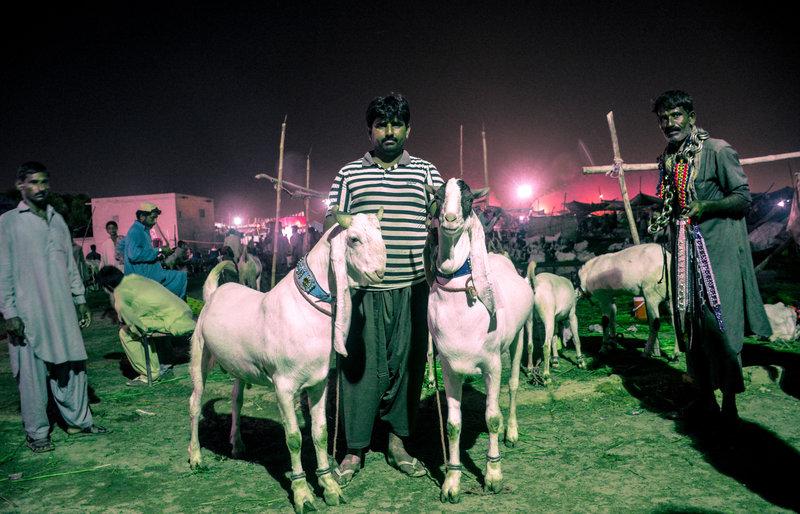 goats--51.jpg