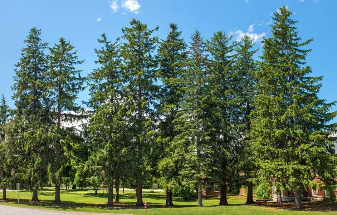 Grovetrees.jpg