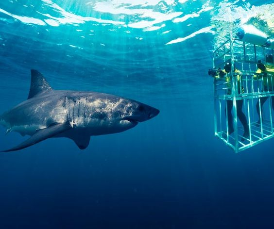 Shark diving in Cape Town. {Image borrowed from Pinterest}